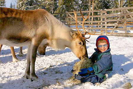 Feed a tame reindeer